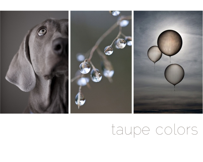 taupe colors - by Myra Madeleine